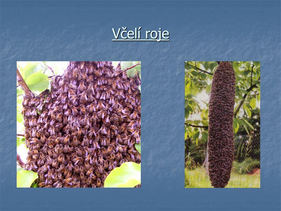Včelí roje