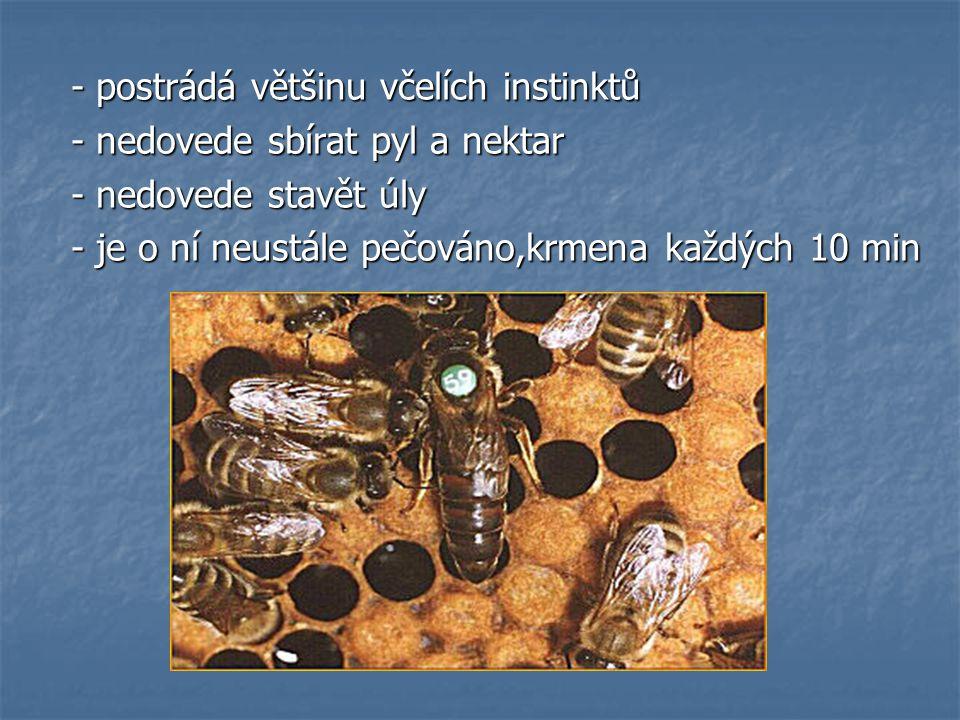 - postrádá většinu včelích instinktů