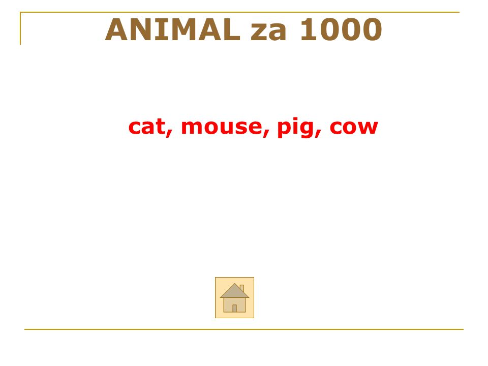 ANIMAL za 1000 cat, mouse, pig, cow 24