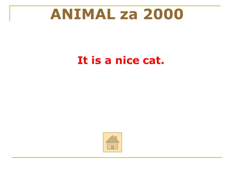 ANIMAL za 2000 It is a nice cat. 26