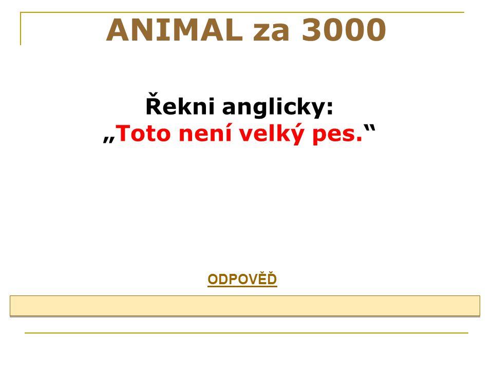 """ANIMAL za 3000 Řekni anglicky: """"Toto není velký pes. ODPOVĚĎ 27"""