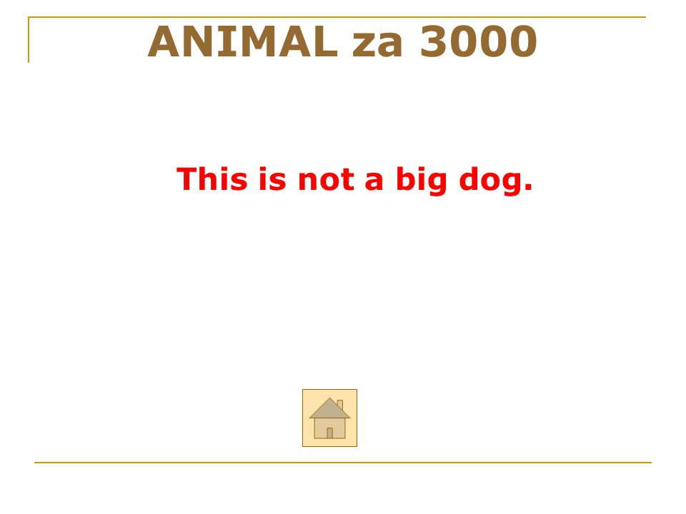 ANIMAL za 3000 This is not a big dog. 28