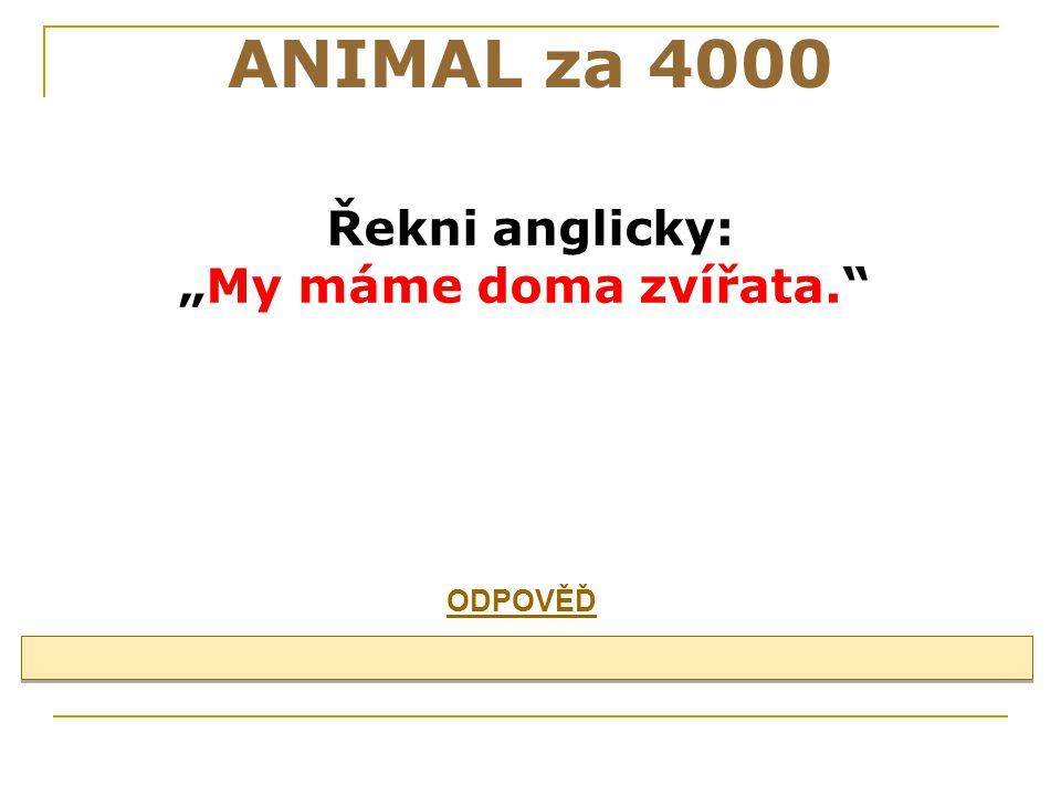 """ANIMAL za 4000 Řekni anglicky: """"My máme doma zvířata. ODPOVĚĎ 29"""