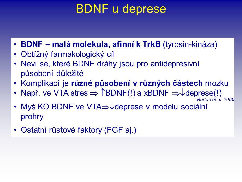 BDNF u deprese BDNF – malá molekula, afinní k TrkB (tyrosin-kináza)