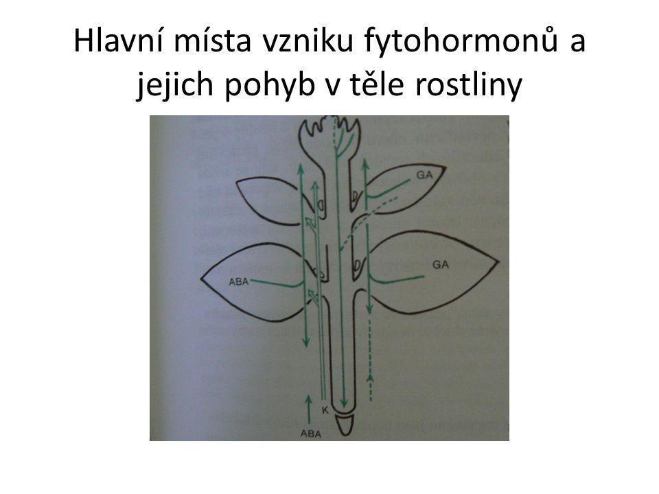 Hlavní místa vzniku fytohormonů a jejich pohyb v těle rostliny