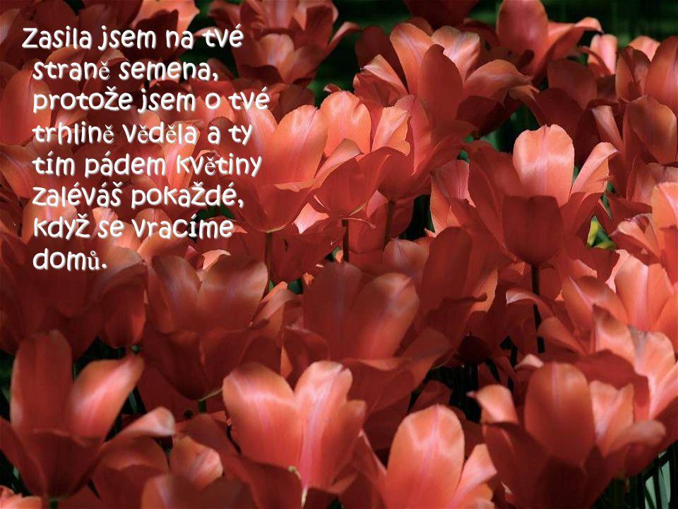 Zasila jsem na tvé straně semena, protože jsem o tvé trhlině věděla a ty tím pádem květiny zaléváš pokaždé, když se vracíme domů.