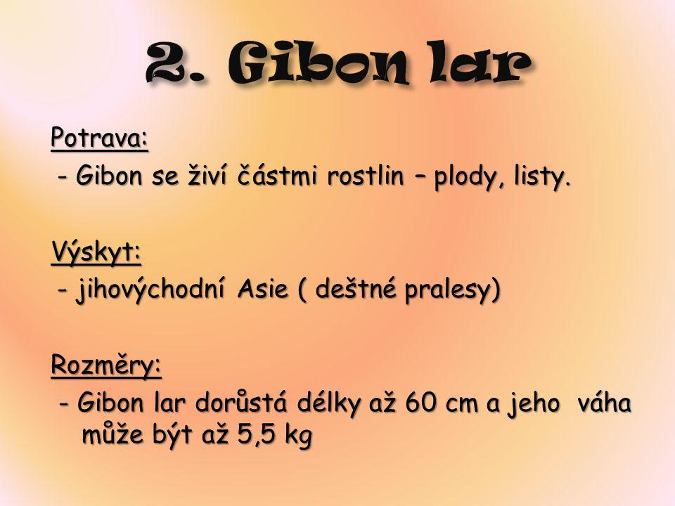 2. Gibon lar