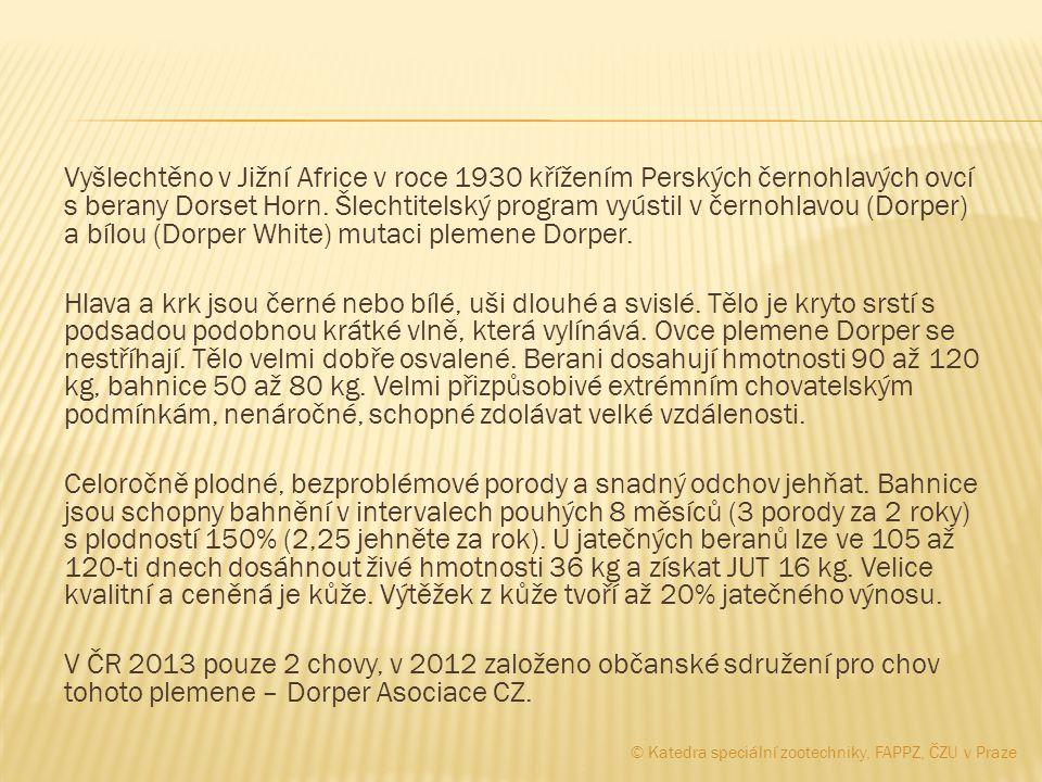 Vyšlechtěno v Jižní Africe v roce 1930 křížením Perských černohlavých ovcí s berany Dorset Horn. Šlechtitelský program vyústil v černohlavou (Dorper) a bílou (Dorper White) mutaci plemene Dorper. Hlava a krk jsou černé nebo bílé, uši dlouhé a svislé. Tělo je kryto srstí s podsadou podobnou krátké vlně, která vylínává. Ovce plemene Dorper se nestříhají. Tělo velmi dobře osvalené. Berani dosahují hmotnosti 90 až 120 kg, bahnice 50 až 80 kg. Velmi přizpůsobivé extrémním chovatelským podmínkám, nenáročné, schopné zdolávat velké vzdálenosti. Celoročně plodné, bezproblémové porody a snadný odchov jehňat. Bahnice jsou schopny bahnění v intervalech pouhých 8 měsíců (3 porody za 2 roky) s plodností 150% (2,25 jehněte za rok). U jatečných beranů lze ve 105 až 120-ti dnech dosáhnout živé hmotnosti 36 kg a získat JUT 16 kg. Velice kvalitní a ceněná je kůže. Výtěžek z kůže tvoří až 20% jatečného výnosu. V ČR 2013 pouze 2 chovy, v 2012 založeno občanské sdružení pro chov tohoto plemene – Dorper Asociace CZ.