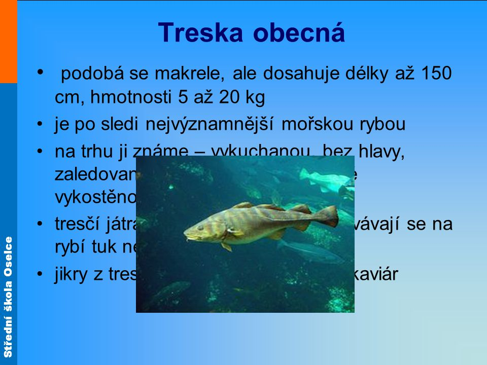 Treska obecná podobá se makrele, ale dosahuje délky až 150 cm, hmotnosti 5 až 20 kg. je po sledi nejvýznamnější mořskou rybou.