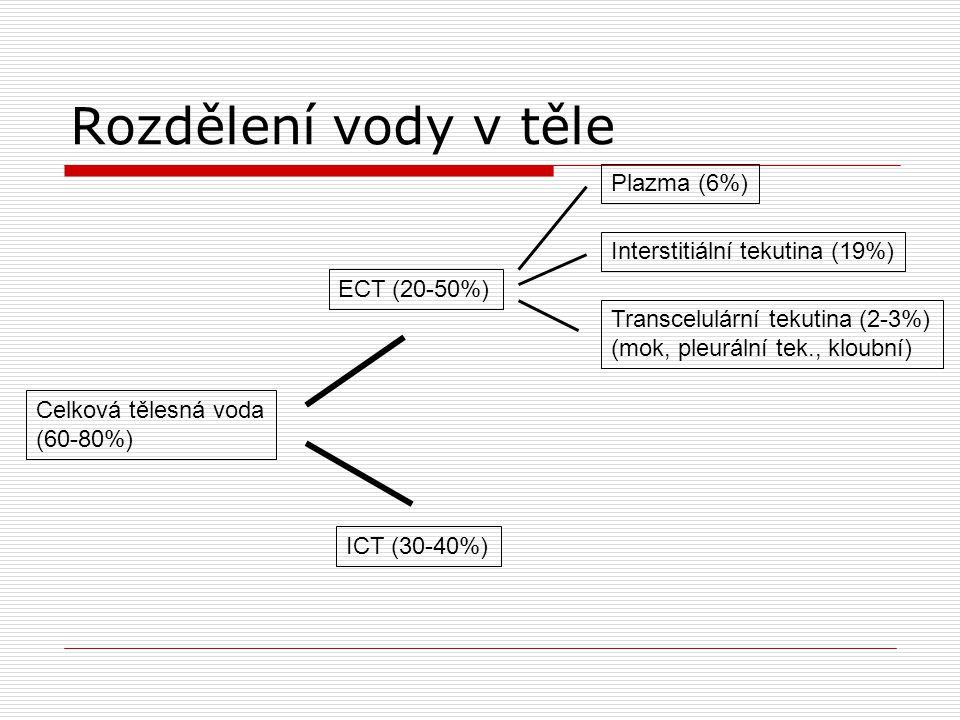 Rozdělení vody v těle Plazma (6%) Interstitiální tekutina (19%)