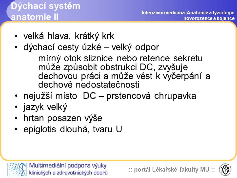 Dýchací systém anatomie II