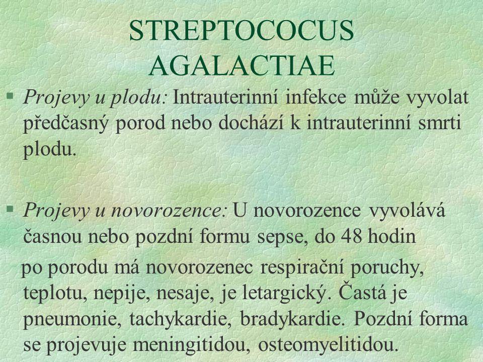 STREPTOCOCUS AGALACTIAE