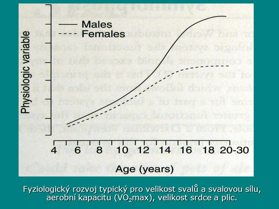 Fyziologický rozvoj typický pro velikost svalů a svalovou sílu, aerobní kapacitu (VO2max), velikost srdce a plic.