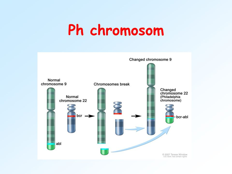 Ph chromosom