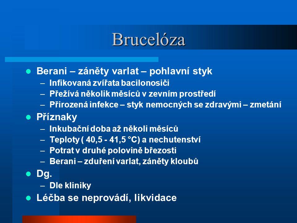 Brucelóza Berani – záněty varlat – pohlavní styk Příznaky Dg.
