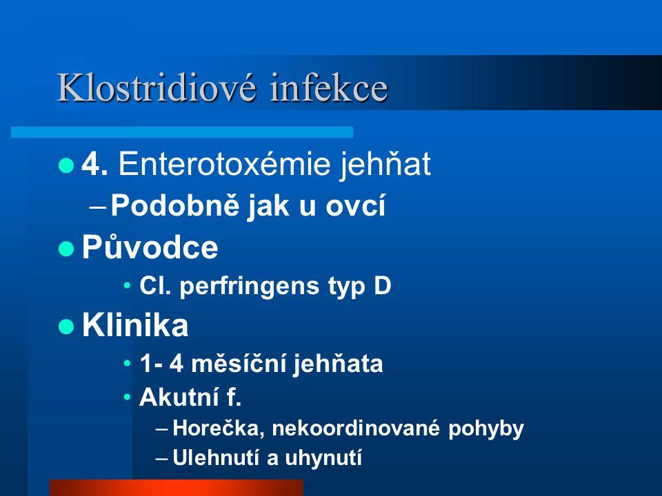 Klostridiové infekce 4. Enterotoxémie jehňat Původce Klinika