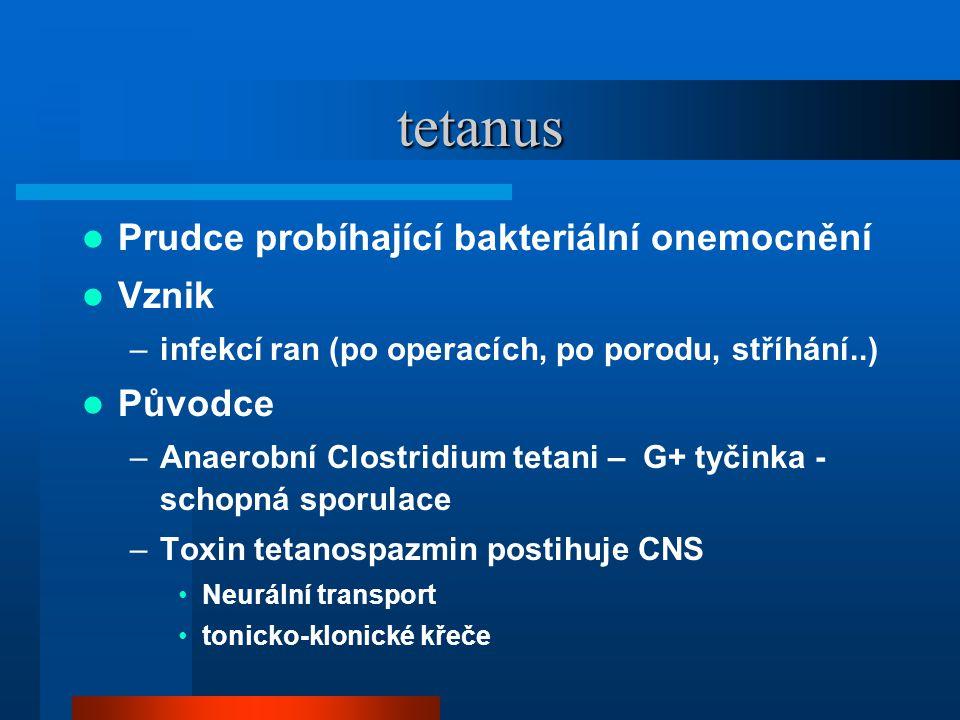 tetanus Prudce probíhající bakteriální onemocnění Vznik Původce