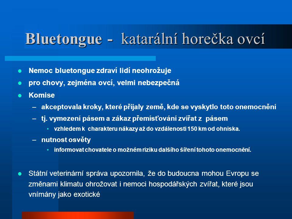 Bluetongue - katarální horečka ovcí