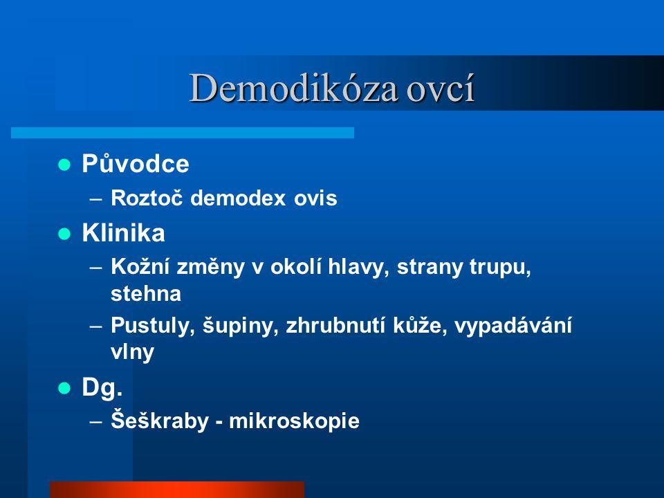 Demodikóza ovcí Původce Klinika Dg. Roztoč demodex ovis