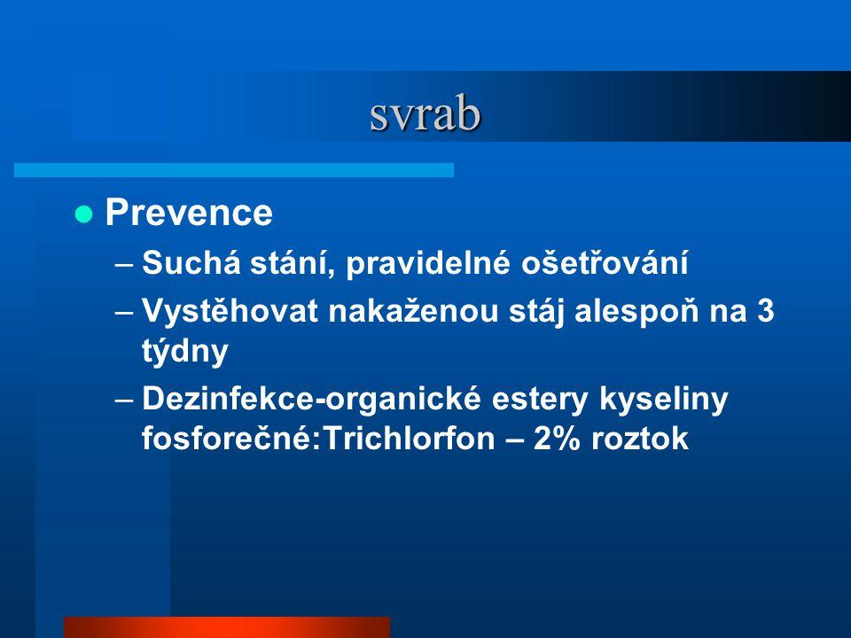 svrab Prevence Suchá stání, pravidelné ošetřování