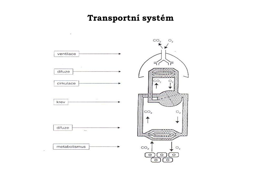 Transportní systém