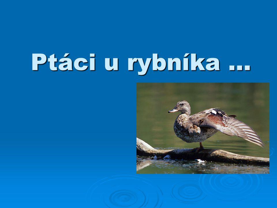 Ptáci u rybníka …