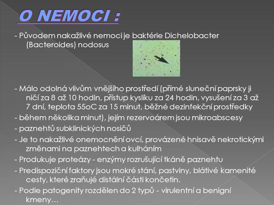 O NEMOCI : - Původem nakažlivé nemoci je baktérie Dichelobacter (Bacteroides) nodosus.