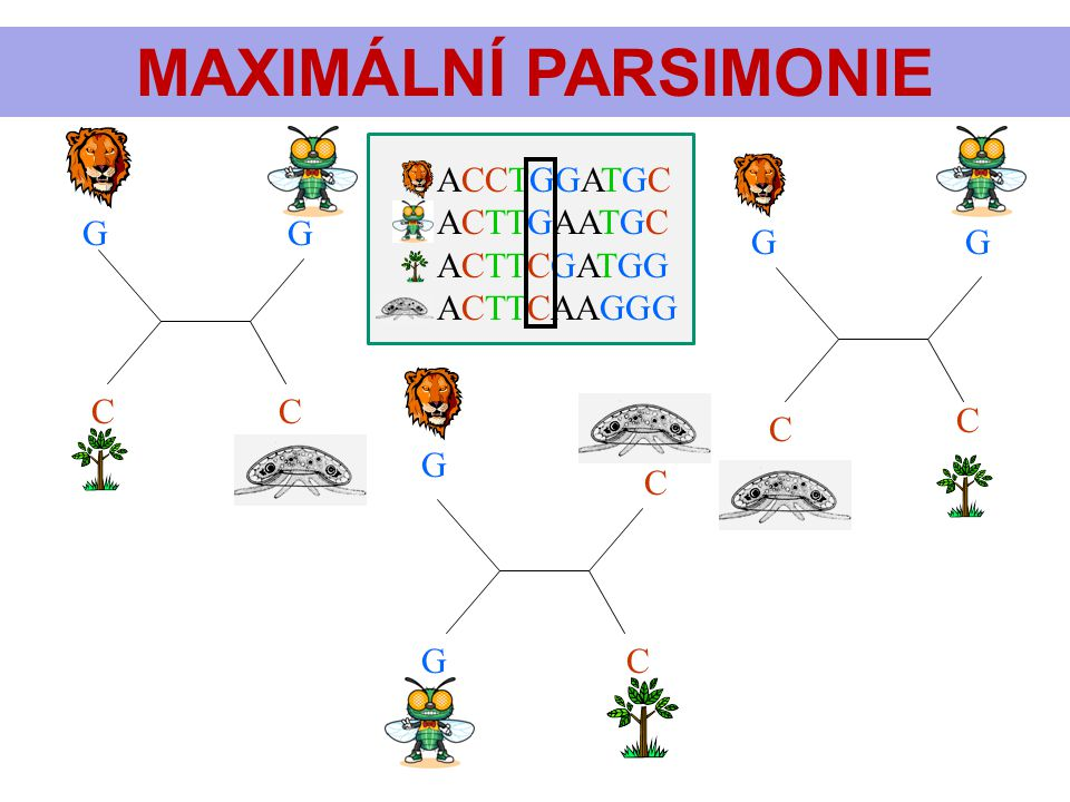 MAXIMÁLNÍ PARSIMONIE ACCTGGATGC ACTTGAATGC ACTTCGATGG ACTTCAAGGG G G G