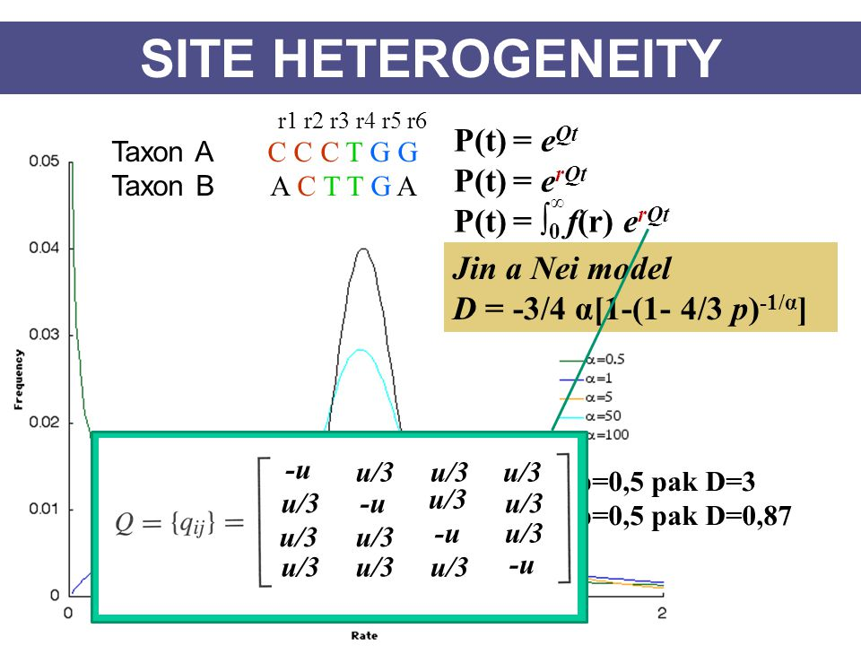 SITE HETEROGENEITY P(t) = eQt P(t) = erQt P(t) = ∫0 f(r) erQt