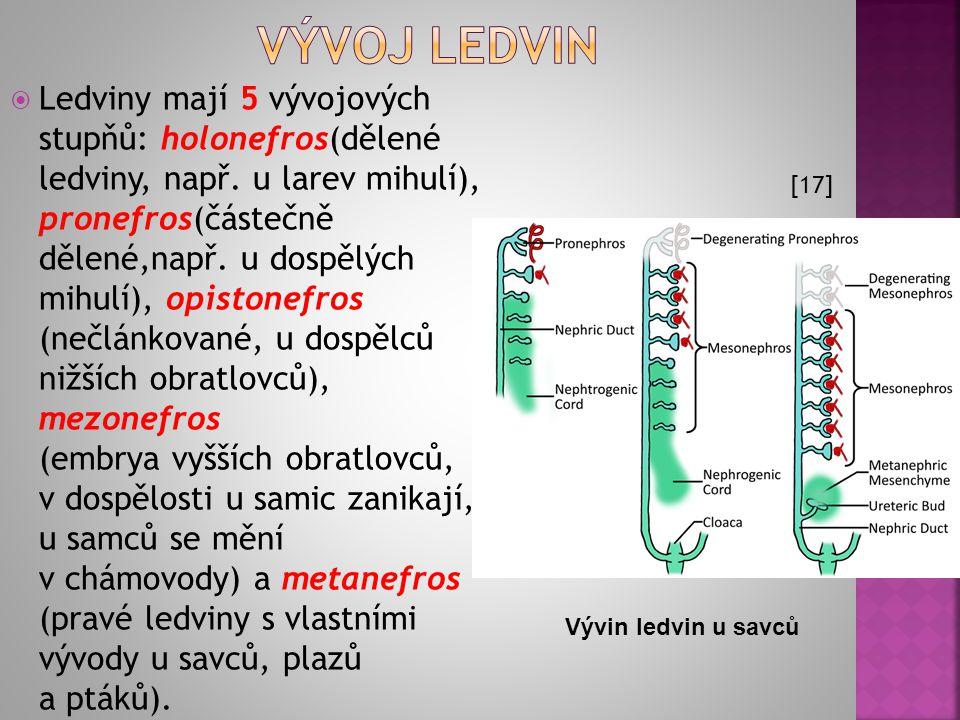 Vývoj ledvin