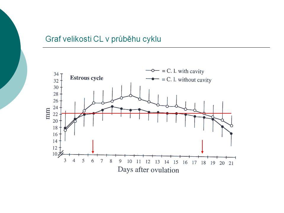 Graf velikosti CL v průběhu cyklu