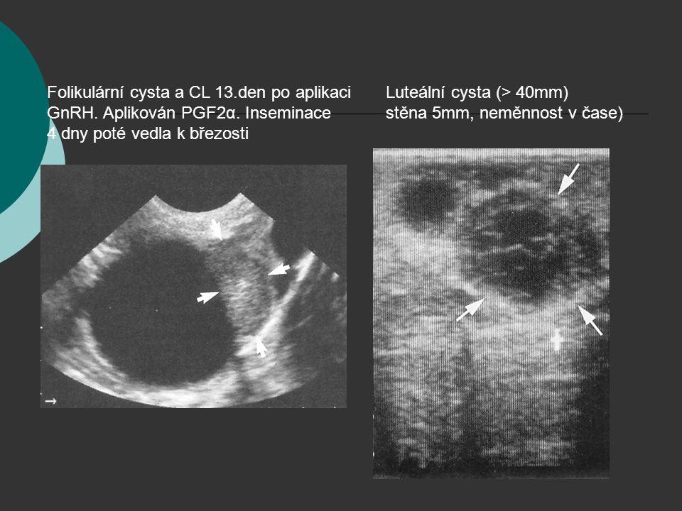 Folikulární cysta a CL 13.den po aplikaci