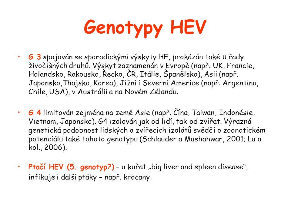 Genotypy HEV