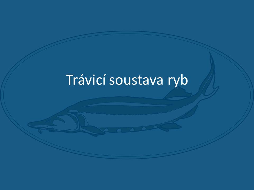 Trávicí soustava ryb