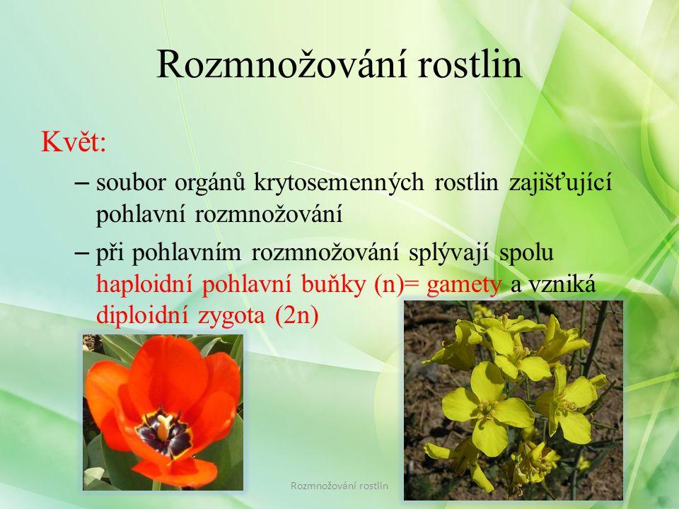 Rozmnožování rostlin Květ: