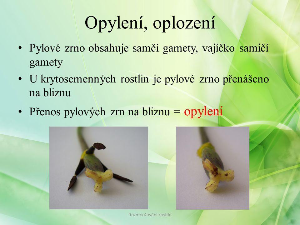 Opylení, oplození Pylové zrno obsahuje samčí gamety, vajíčko samičí gamety. U krytosemenných rostlin je pylové zrno přenášeno na bliznu.