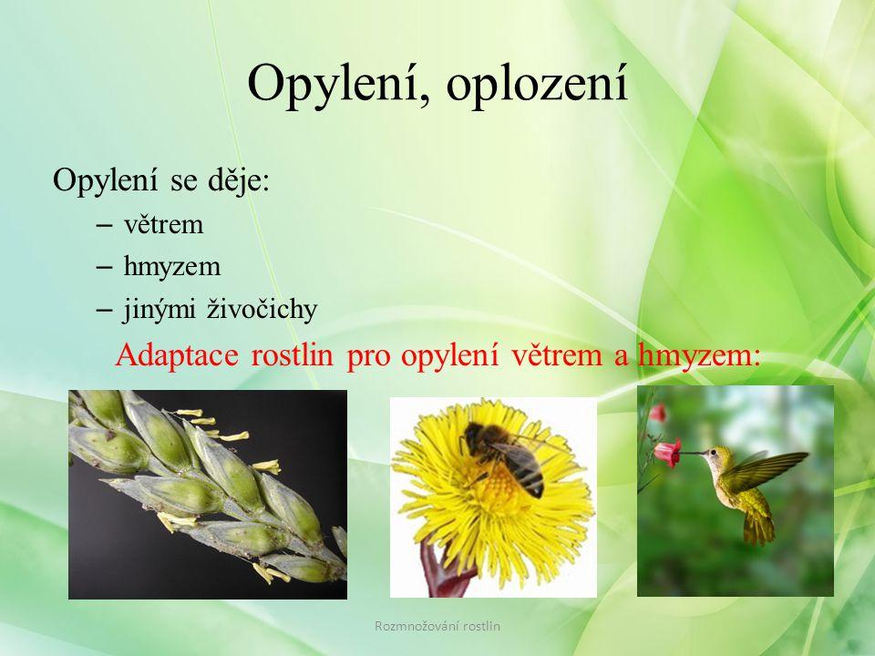 Adaptace rostlin pro opylení větrem a hmyzem: