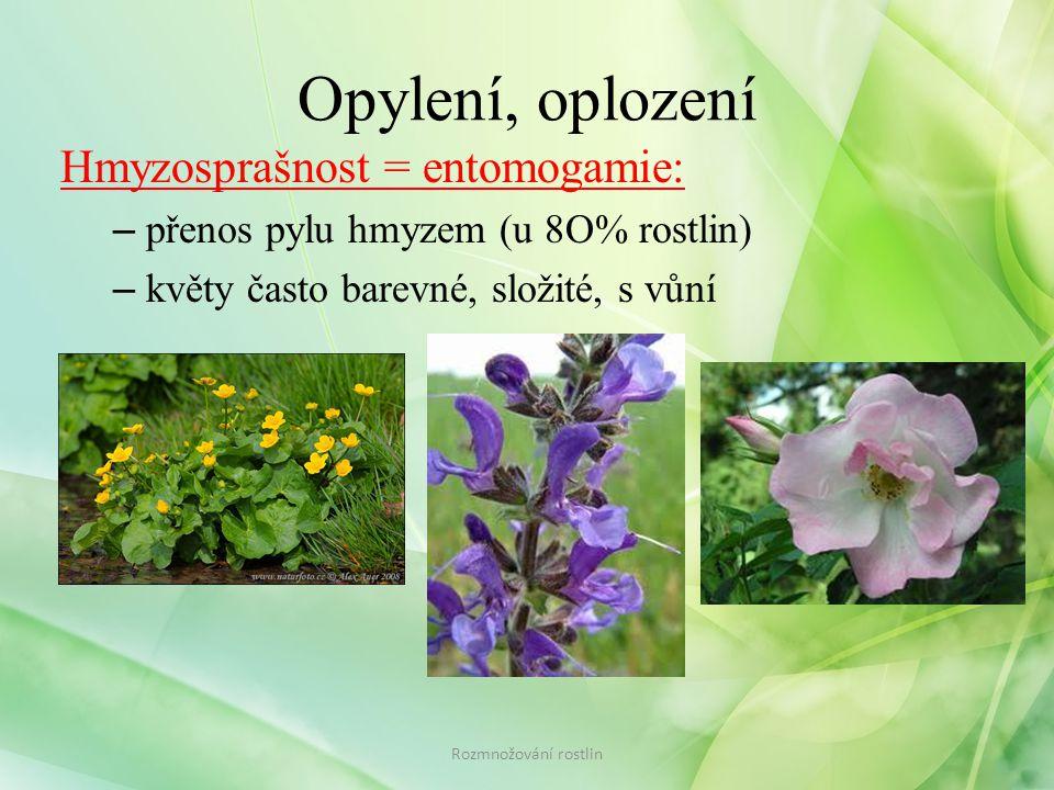 Opylení, oplození Hmyzosprašnost = entomogamie: