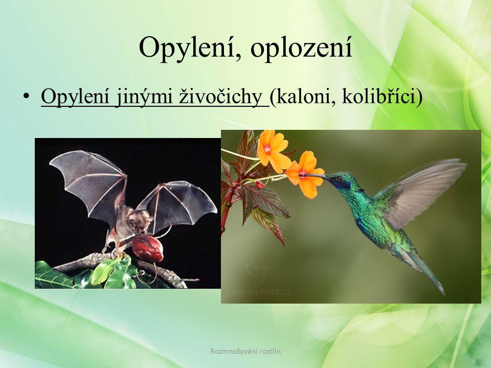 Opylení, oplození Opylení jinými živočichy (kaloni, kolibříci)