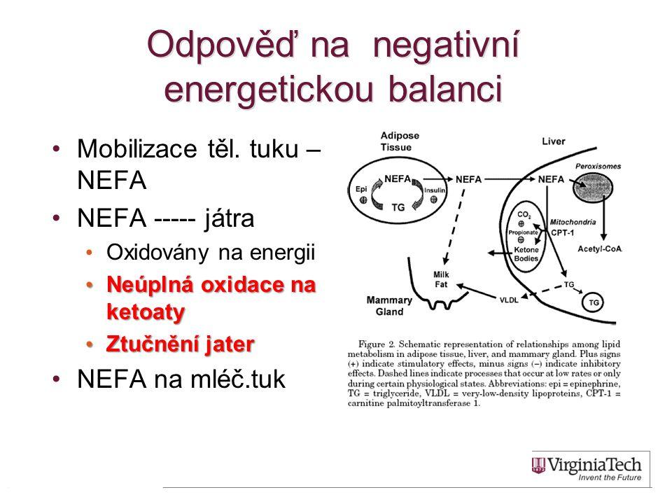 Odpověď na negativní energetickou balanci