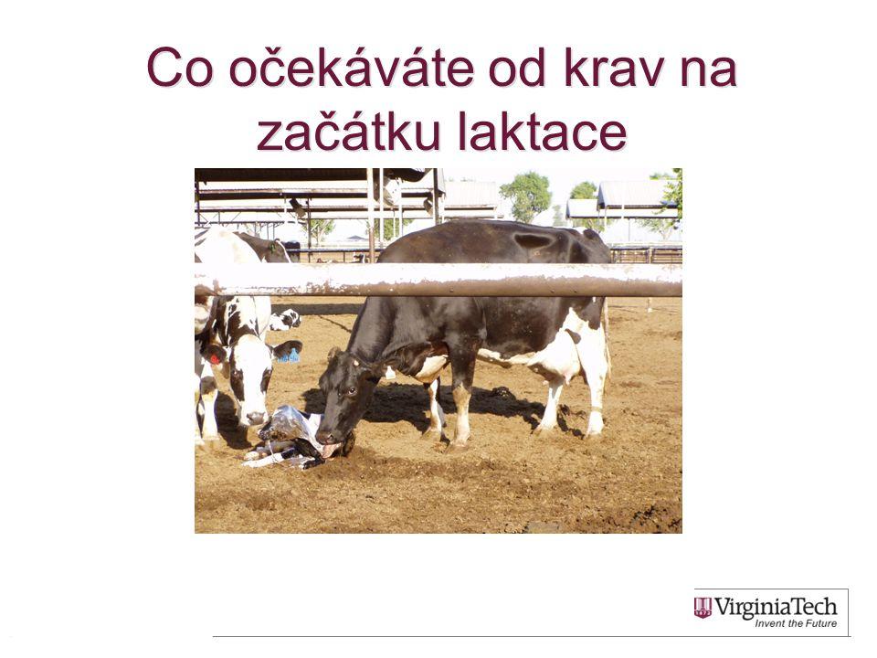 Co očekáváte od krav na začátku laktace