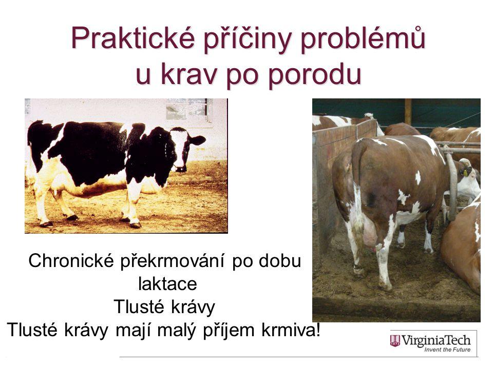 Praktické příčiny problémů u krav po porodu