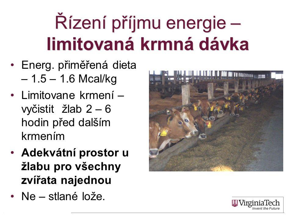 Řízení příjmu energie – limitovaná krmná dávka