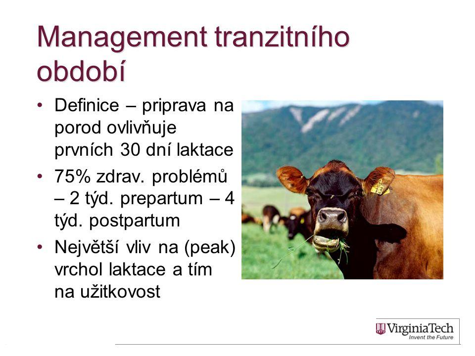 Management tranzitního období