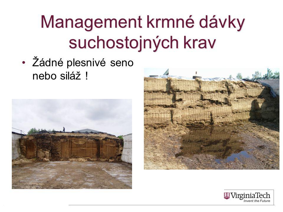 Management krmné dávky suchostojných krav
