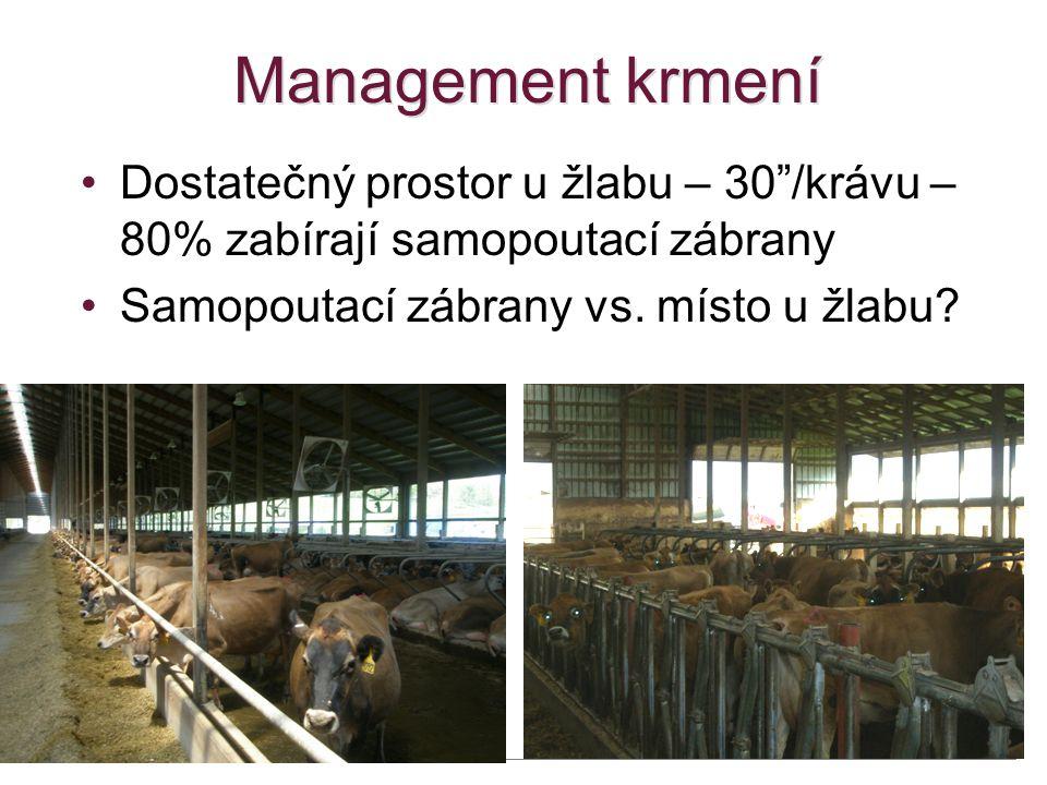 Management krmení Dostatečný prostor u žlabu – 30 /krávu – 80% zabírají samopoutací zábrany.