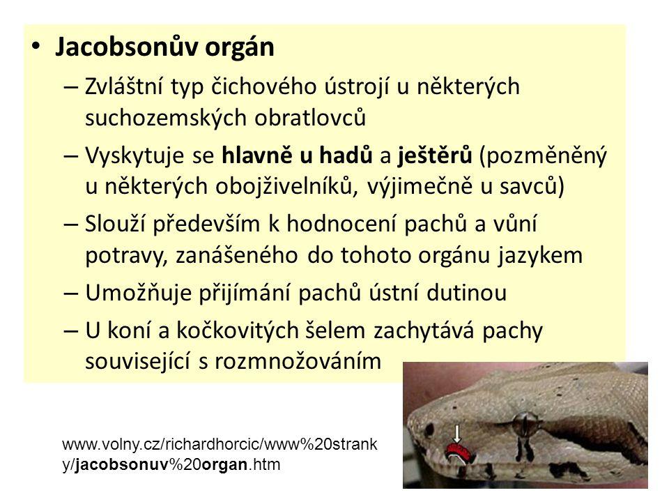 Jacobsonův orgán Zvláštní typ čichového ústrojí u některých suchozemských obratlovců.