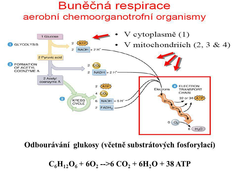 Odbourávání glukosy (včetně substrátových fosforylací)