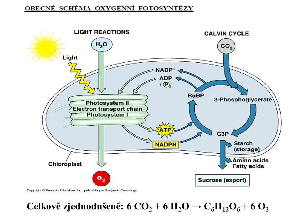 Celkově zjednodušeně: 6 CO2 + 6 H2O → C6H12O6 + 6 O2