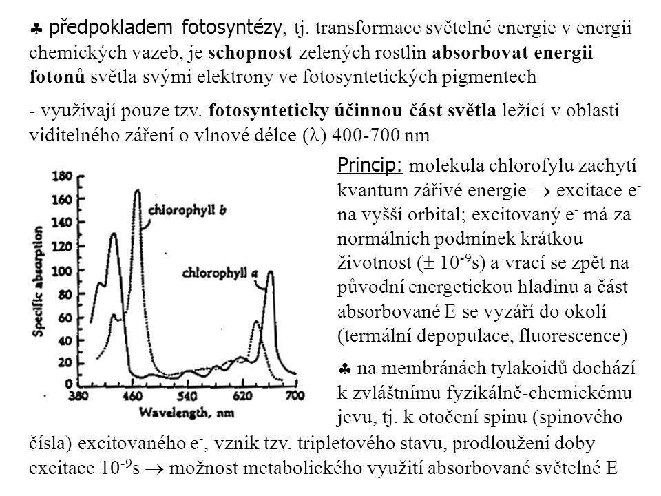  předpokladem fotosyntézy, tj